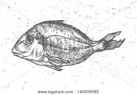 Vintage graphic with fish, Vector Print Seafood