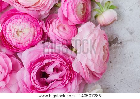 Pink and white ranunculus flowers buds close up on white wooden background