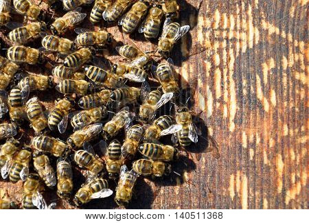 bee hive with bees on it for your design