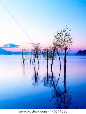 beautiful lake view in mornig fog with trees and mystic mountains on the background in tender purple-blue tones, with seaguls sitting on some of the tree tops being the leftovers of a mole