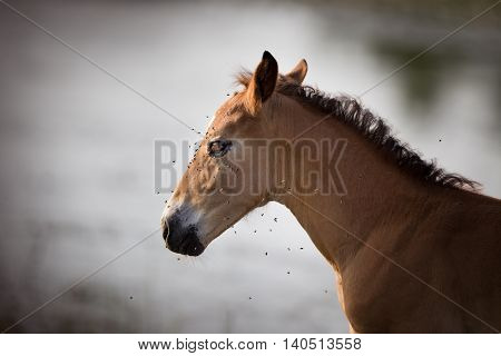 Horse Portrait With Lot Of Flies