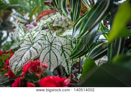 Plants And Flowers In The Charming Garden