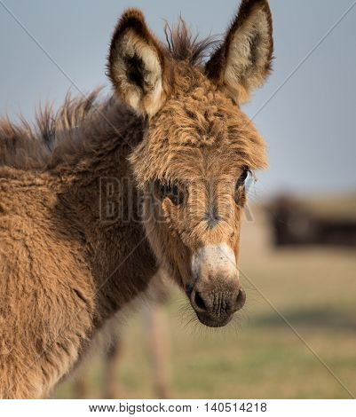 Portrait Of Young Donkey