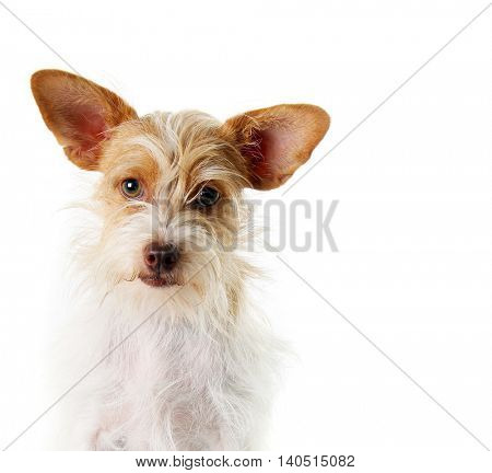 Mixed breed, part terrier rescue dog.