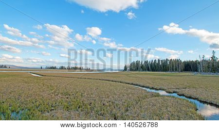 Pelican Creek marsh and sedge grass at sunset in Yellowstone National Park in Wyoming USA