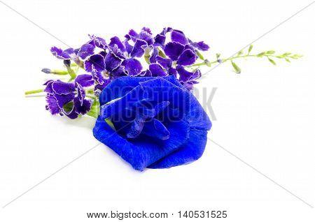 Clitoria ternatea, common names including butterfly pea, blue pea, Aprajita, Cordofan pea