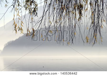 Foliage Of Tree On Annecy Lake In France