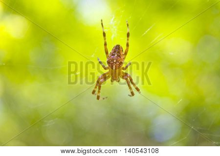 Small spider and spiderweb on a blurred background.