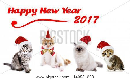 Funny christmas cats. Happy News Year 2017