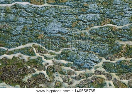 Blue and green toxic algae on the water surface closeup. Environmental pollution. Ecological catastrophy.