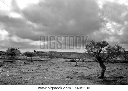 Sad Landscape