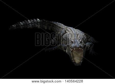 Freshwater Crocodile In The Dark