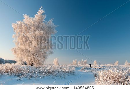 Male photographer photographing a snow-covered tree in winter, in clear weather