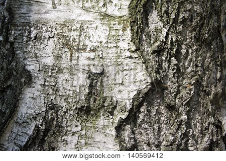 rough tree bark closeup as background, texture