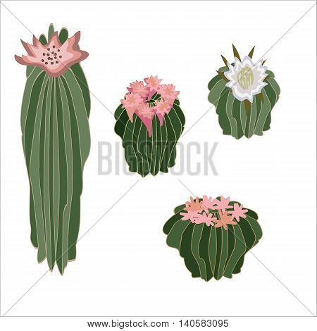 Hand drawn vector illustration with various cacti and flowers.