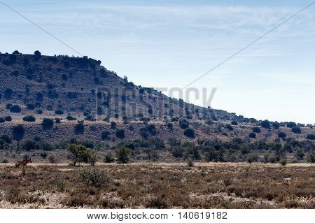 A Buck At The Mountain - Cradock Landscape