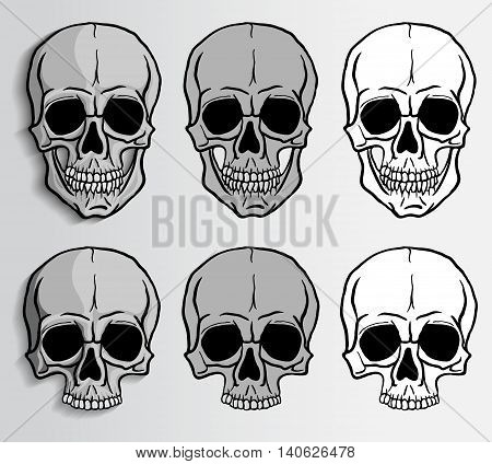 Human skulls set. Freehand drawing human skulls. Vector illustration.
