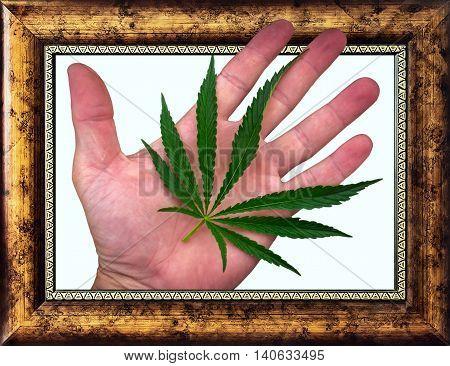 cannabis leaf on the palm. marijuana leaf in gold frame