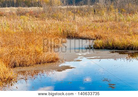 A wetland marsh in autumn on a tranquil morning reflecting the sky and clouds