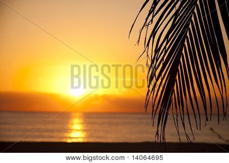 Palm Tree Leaf Silhlouette