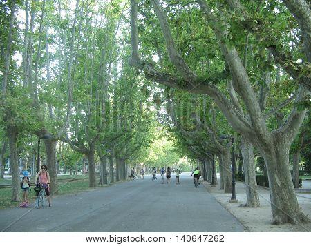 Linda  Avenida en el Parque Labordeta. Zaragoza. España.