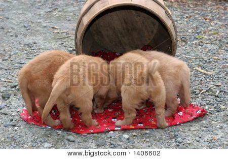 Puppies And Barrel