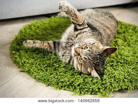 Cute cat on green carpet