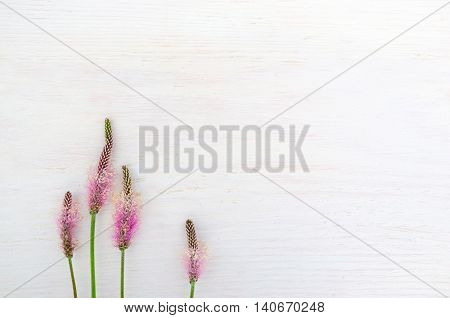 Pink field flowers on white background, copyspace. White backdrop with delicate rustic motives