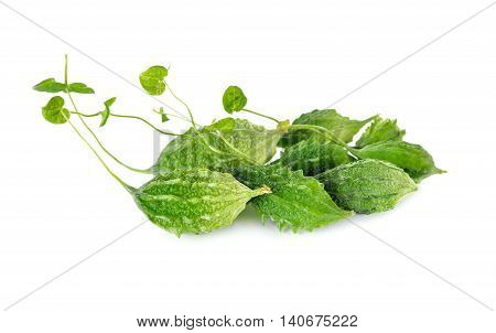 mini whole fresh bitter gourd with stem on white background