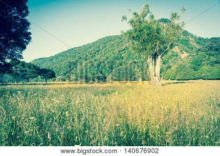 Retro effect New Zealand Landscape rural scene field hills and trees faded look focus on distinctive New Zealand native cabbage tree.