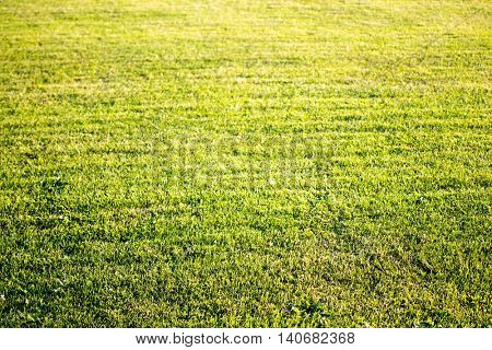 green cutted grass background on golf field, natural image without any postproduction