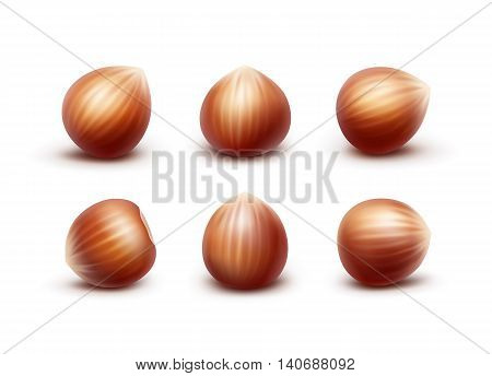 Vector Set of Full Unpeeled Realistic Hazelnuts Close up Isolated on White Background