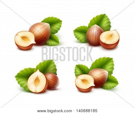 Vector Set of Full and Half Peeled Unpeeled Realistic Hazelnuts with Leaves Close up Isolated on White Background