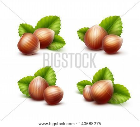 Vector Set of Full Unpeeled Realistic Hazelnuts with Leaves Close up Isolated on White Background