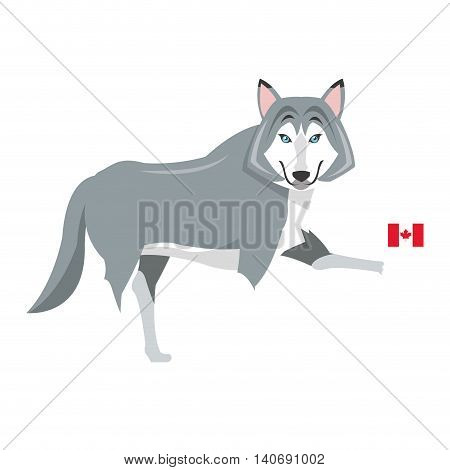 flat design big wolf with canadian flag icon vector illustration