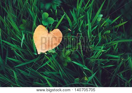 Orange heart-shaped leaf lying on fresh green grass autumn background. Symbol fall concept red love. Rustic style nature wallpaper.
