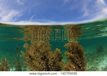 Seaweed, blue ocean and sunny sky