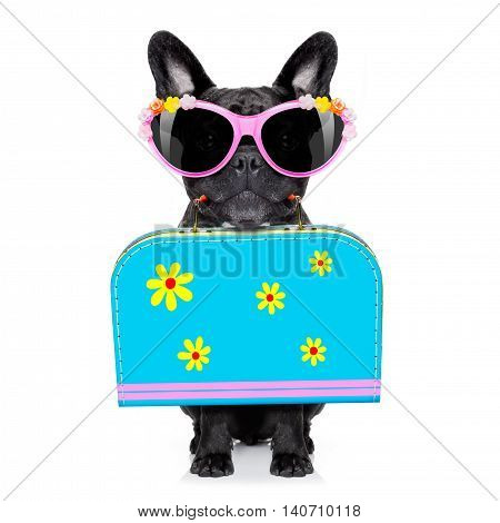 Dog On Summer  Holiday Vacation
