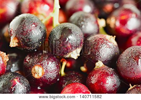 currant close up. background of black currant