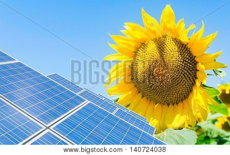 photo montage with solar panels and sunflower flower
