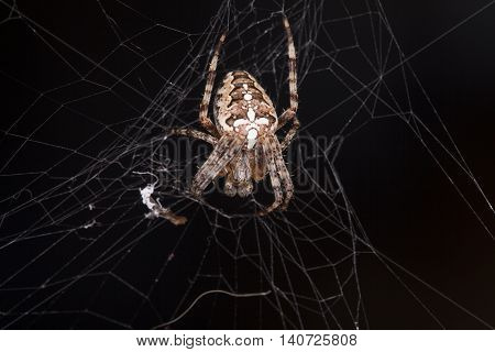 Photo Of Spider Waiting For Its Prey