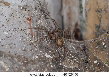 Spider Sitting On A Spider's Web