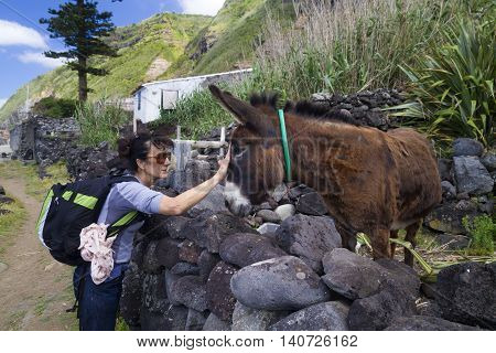 Tourist cuddle donkey in Azores island Portugal
