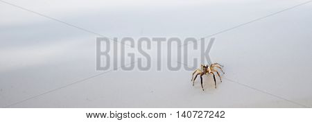 close up the spider on white background.