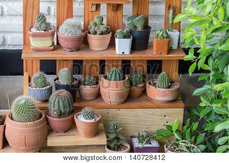 Little cactus plant in the flower pot. Various cactus plants in modern lifestyle of garden.