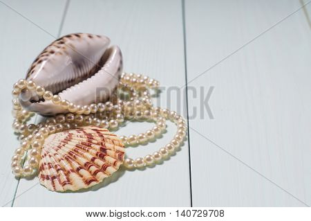 Decor of seashells close-up on blue wooden table. Sea objects - shells pearls. Background with sea cockleshells and pearls