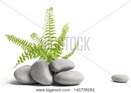Green fern leaf on pebble