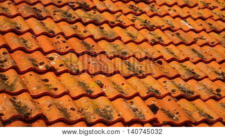Orange roof tiles with moss and lichen