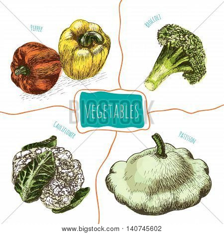 Vector illustration colorful set with vegetables. Different sort of vegetables on white background cauliflower