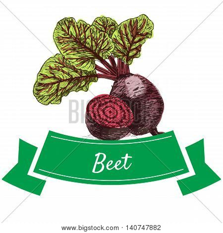 Vector illustration colorful set with beet. Illustration sorts of vegetables on white background